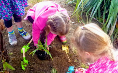 Planting the seeds of growth as a community (Hastings, Heretaunga)